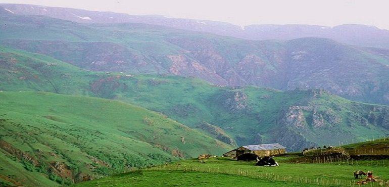 فروش شالی در لاهیجان