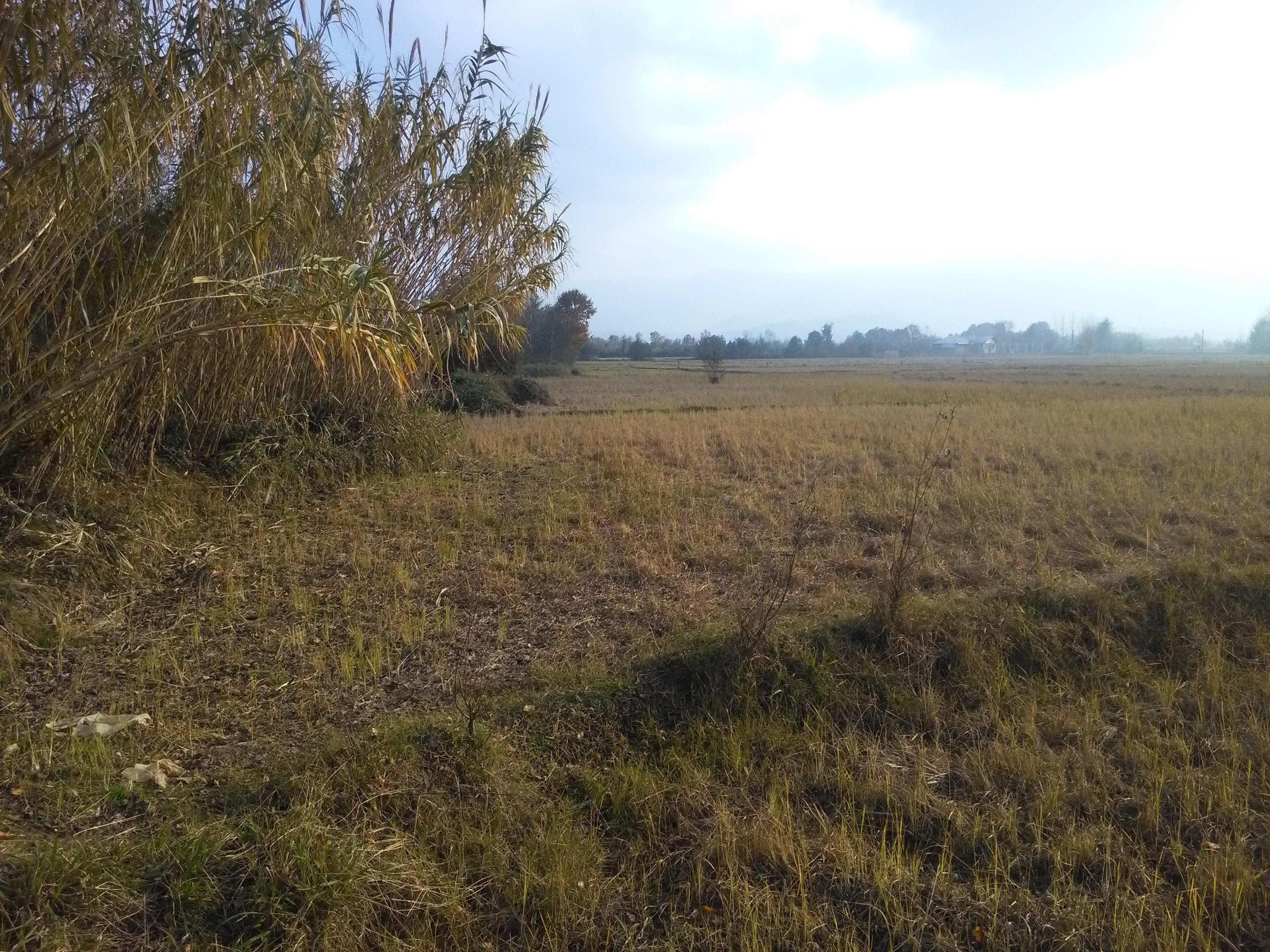فروش زمین شالی کاری درمنطقه سیاهکل